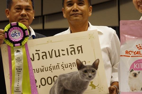 thailand cat show 1