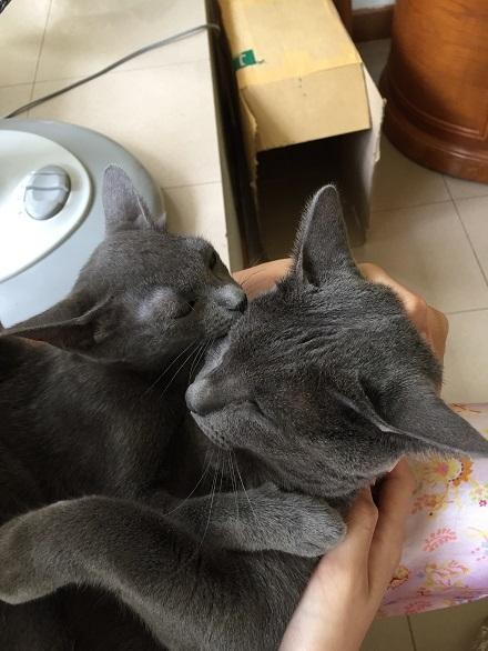 jiw & kitten 2