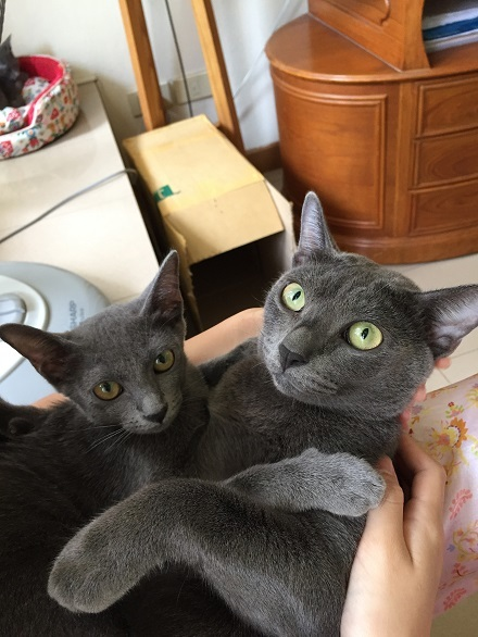 jiw & kitten 3
