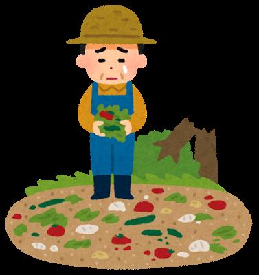 農業、災害、野菜
