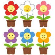 花、鉢植え