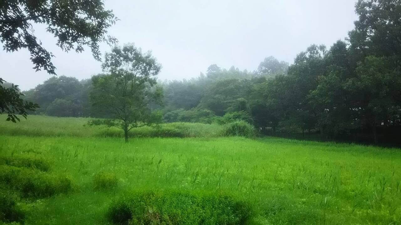 湿地に生えるクヌギ