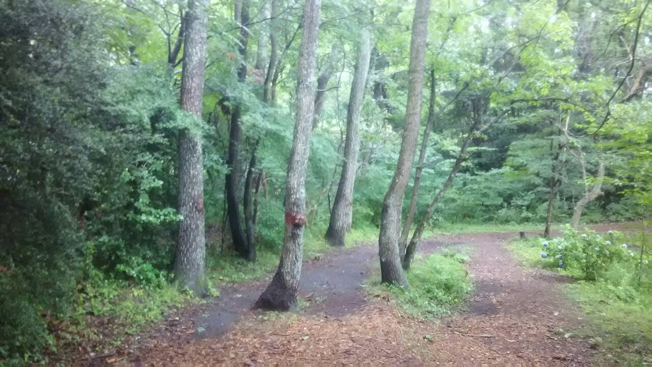 一碧湖湖畔のクヌギ林