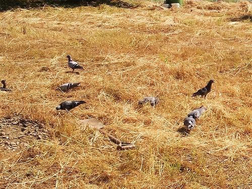 500畑の鳥170523
