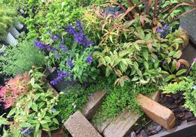 楽しいお庭造り♪