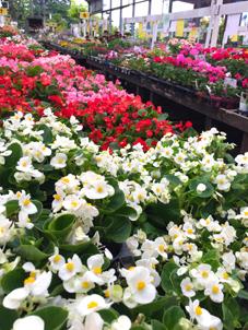 花壇苗いっぱい