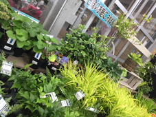 日陰におすすめ植物
