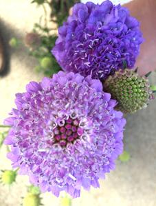 お花もキレイ♪