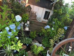 店舗入口 あじさいのあるお庭