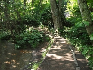 170629木漏れ日の道