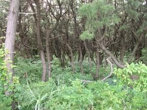 170720松林