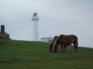170727灯台と寒立馬