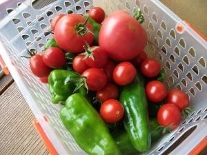 170824収穫野菜