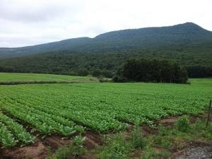 170831山の畑