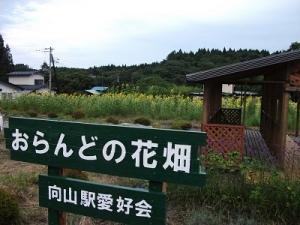 170831おらんどの花畑