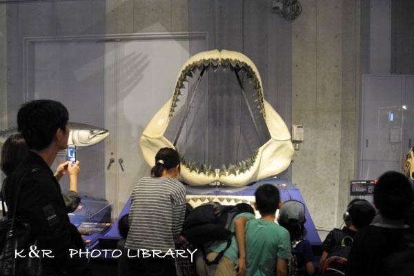 2016年9月22日海のハンター展5