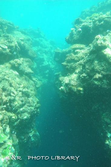 2016年11月4日奄美大島・三角岩PartII12