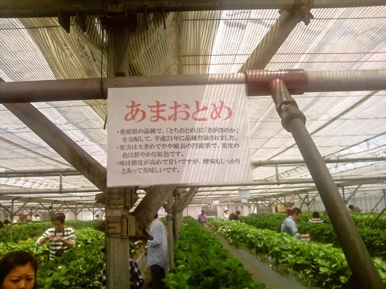 かたのいちご園(品種)
