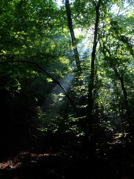 木漏れ日0616