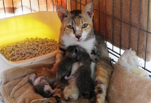 P1110267 - 保護猫