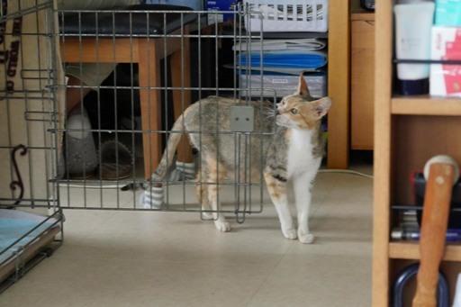 白子猫開眼-b P1110488