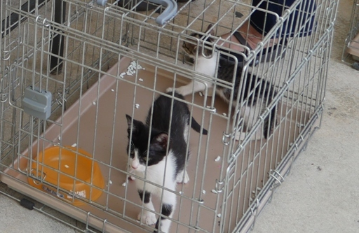 P1120397 保健所2猫