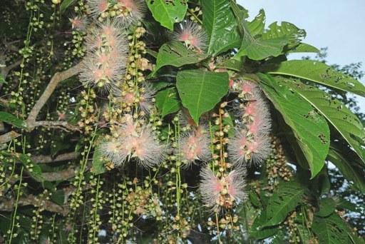 サガリ花-c P1120501