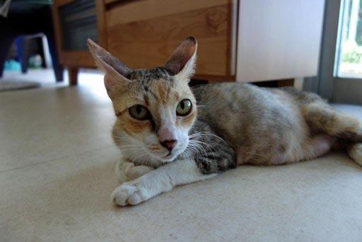 三毛母猫 DSC03656