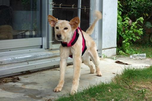 犬毛刈-f DSC03791
