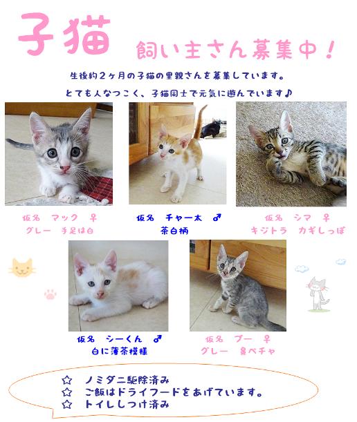 子猫募集チラシ