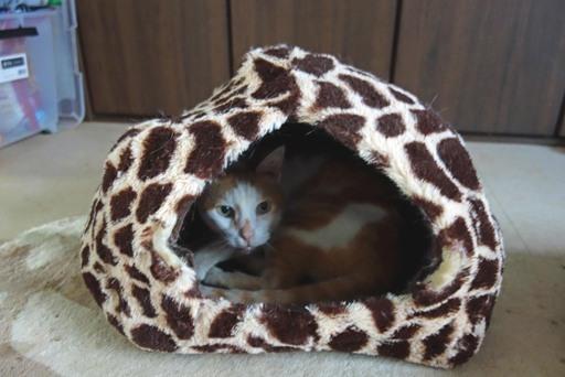 猫ハウス-c DSC04547