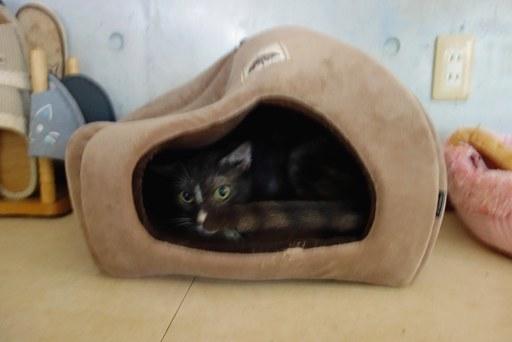 猫ハウス-d DSC04549
