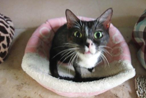 猫ハウス-f DSC04543