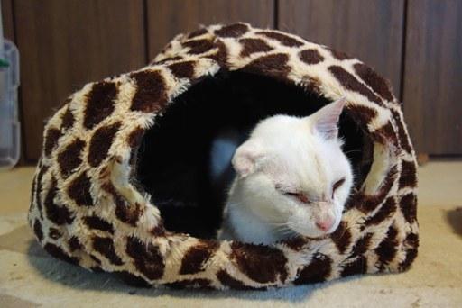 猫ハウス-a DSC04539