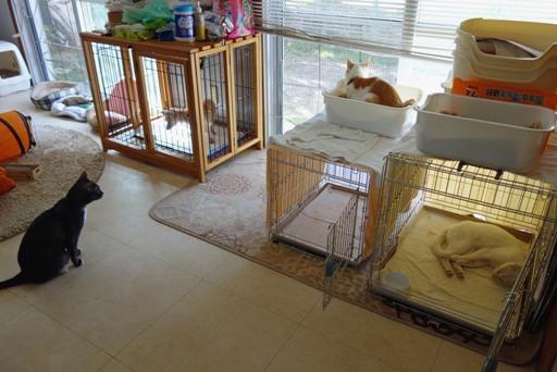 台風去-猫部屋 DSC05217