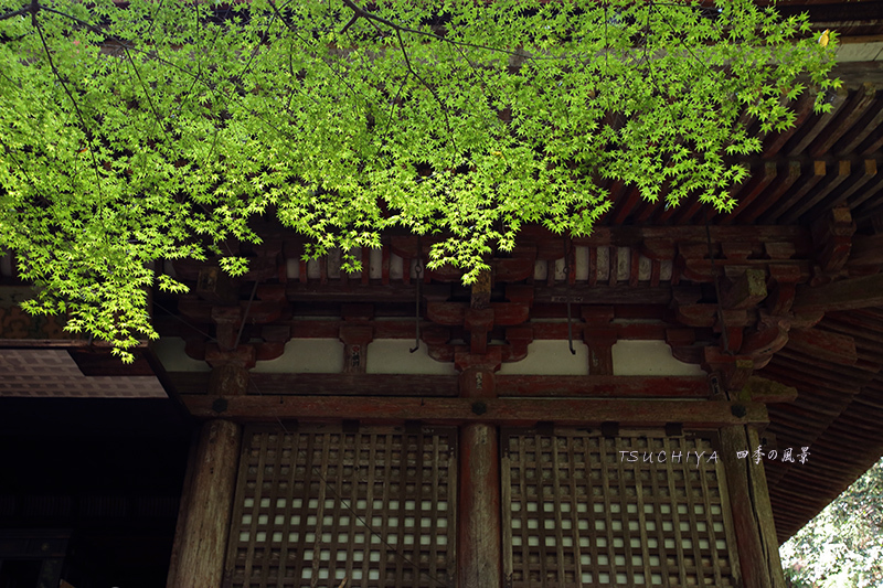 奈良 室生寺