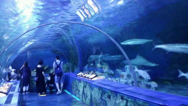 品川水族館トンネル母と
