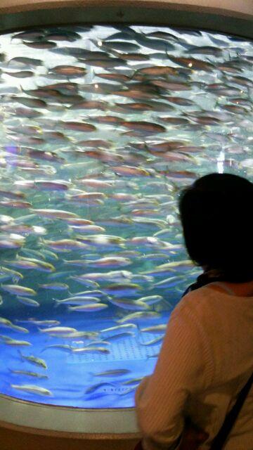 品川水族館いわし