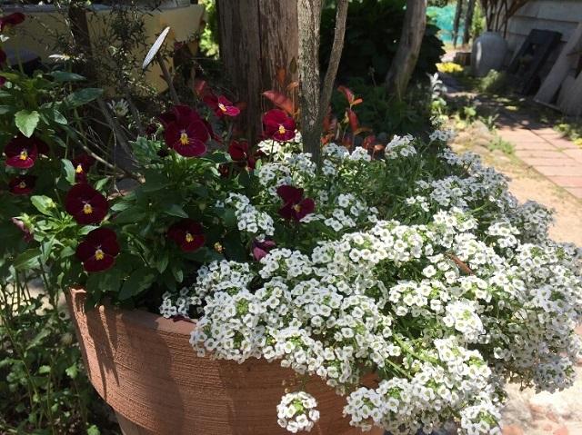 170518 風の庭④ ブログ用