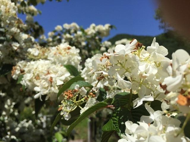 170518 風の庭⑩ ブログ用