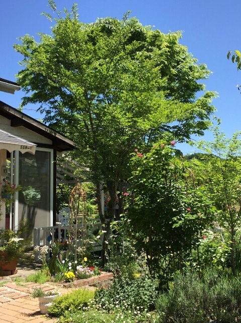 170518 風の庭⑧ ブログ用