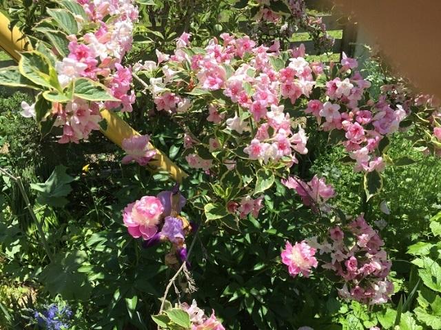 170518 風の庭⑨ ブログ用
