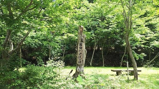 170720 若杉天然林① ブログ用