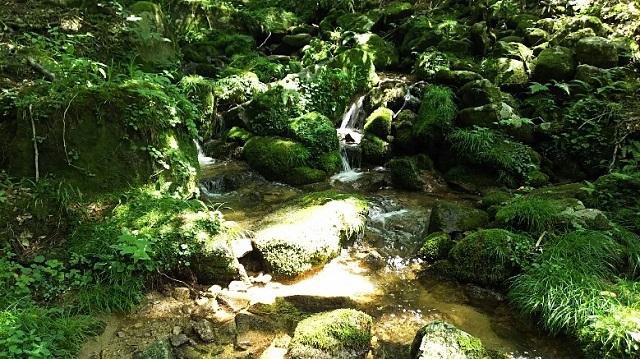 170720 若杉天然林⑤ ブログ用