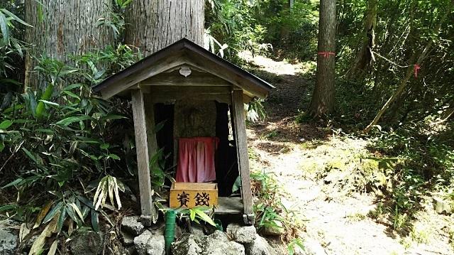 170720 若杉天然林⑧ ブログ用