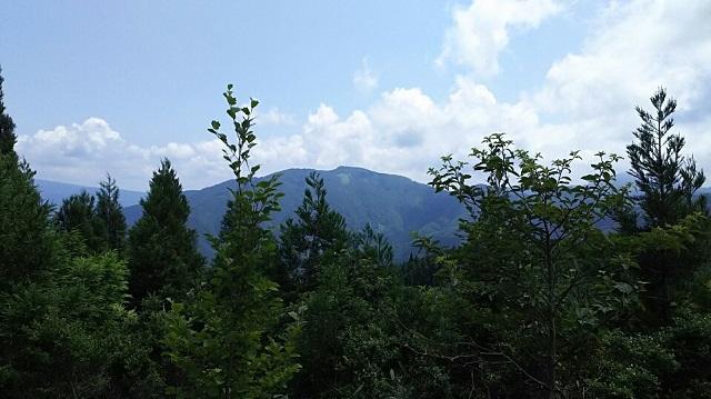 170720 若杉天然林⑨ ブログ用