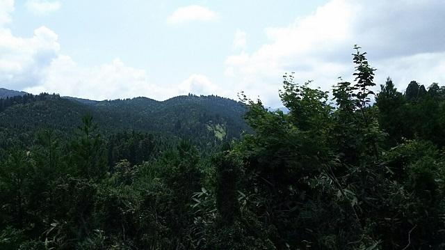 170720 若杉天然林⑩ ブログ用