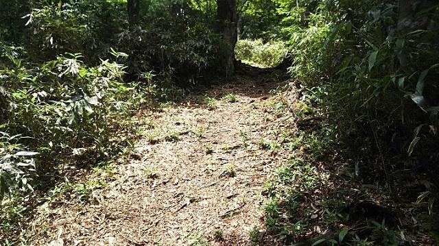 170720 若杉天然林⑫ ブログ用