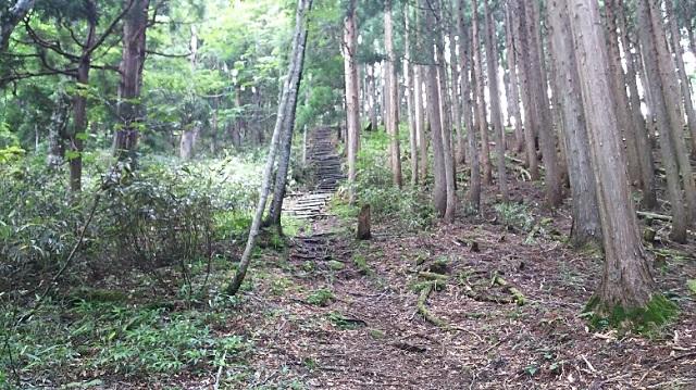 170720 若杉天然林⑬ ブログ用