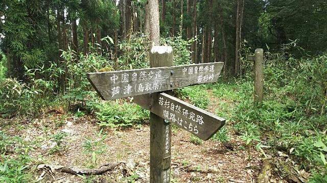 170720 若杉天然林⑭ ブログ用